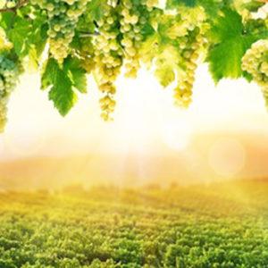 Weißwein Histamingeprüft